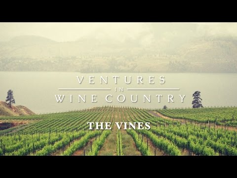 Ventures in Wine Country | Episode 1: The Vines